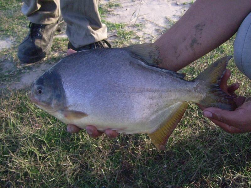 Visita a criadero de peces en esquina for Criadero de peces